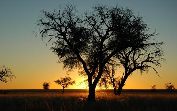 Фото обои солнце, пейзаж, закат, ветки, природа, дерево, вечер