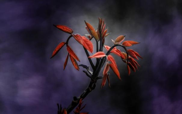 Фото обои красный, лист, Ветка
