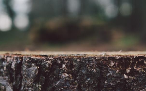Фото обои дерево, пень, пенек, кора
