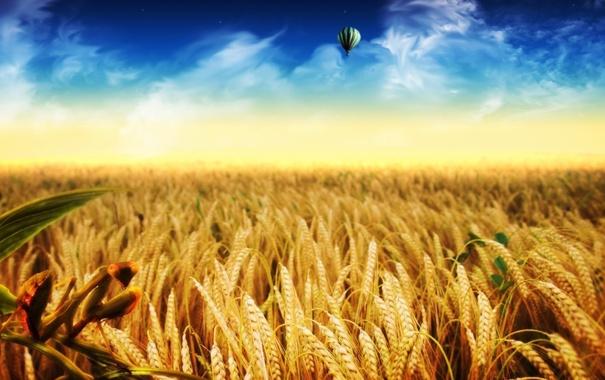 Фото обои колосья, поле, воздушный шар