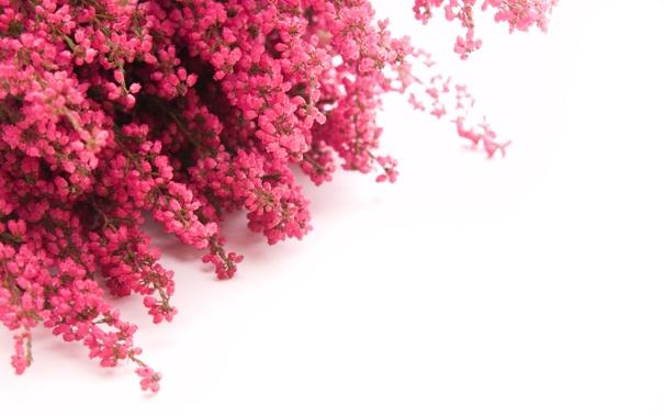 Фото обои ветки, охапка, цветы
