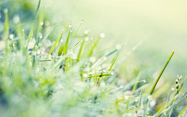 Фото обои зелень, трава, капли, макро, свет, блики, газон