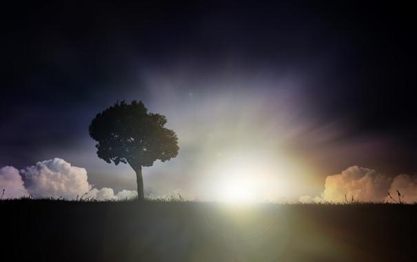 Фото обои поле, трава, лучи, свет, деревья, холмы, обои