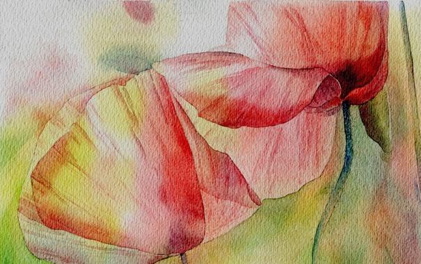 Фото обои цветы, рисунок, маки