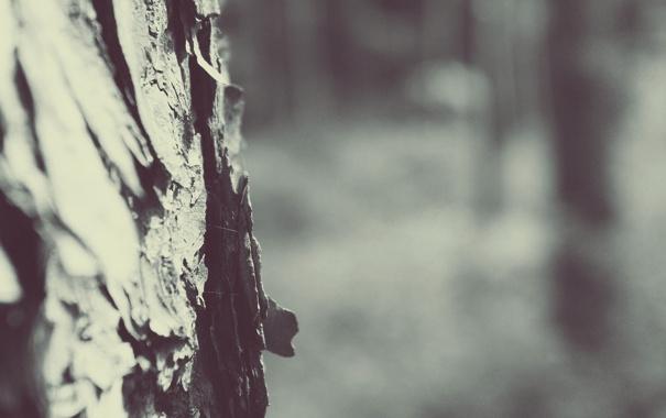 Фото обои макро, фото, дерево, ствол, кора, обои для рабочего стола, full hd wallpapers 2560x1440