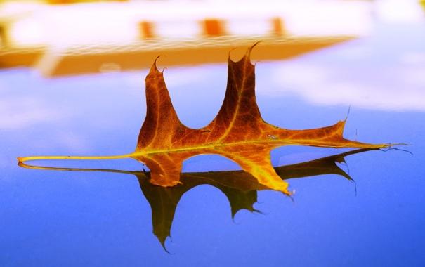 Фото обои осень, листья, макро, лист, жёлтый, осенние обои, листок листки