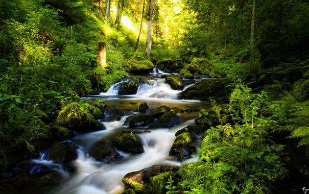 Фото обои лес, деревья, река, камни