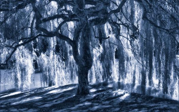 Фото обои свет, синий, дерево, тень