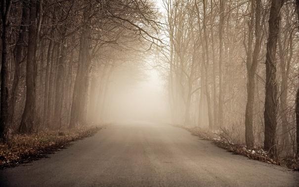 Фото обои дорога, лес, туман