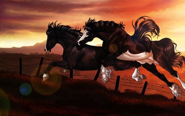 Фото обои закат, прыжок, забор, кони, арт, колючая проволка