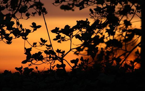 Фото обои небо, листья, закат, природа, ветви, тишина, растение