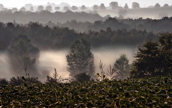 Фото обои поле, пейзаж, природа, туман
