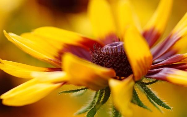 Фото обои цветок, макро, желтый, лепесток