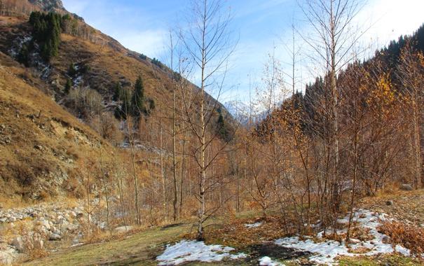 Фото обои снег, горы, желтый, елки, Осень, березы