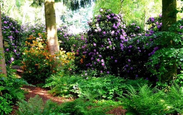 Фото обои зелень, трава, деревья, цветы, парк, Швейцария, кусты