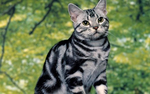 Фото обои кошка, лето, полосатик