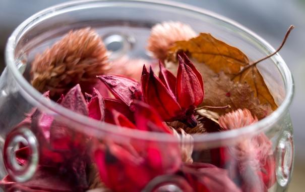 Фото обои осень, стекло, листья, цветы, сухие, банка, баночка