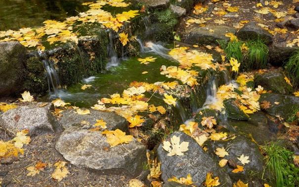 Фото обои осень, трава, листья, вода, пруд, камни, мох