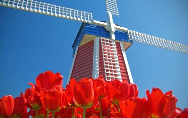 Фото обои небо, цветы, тюльпаны, Нидерланды, ветряная мельница