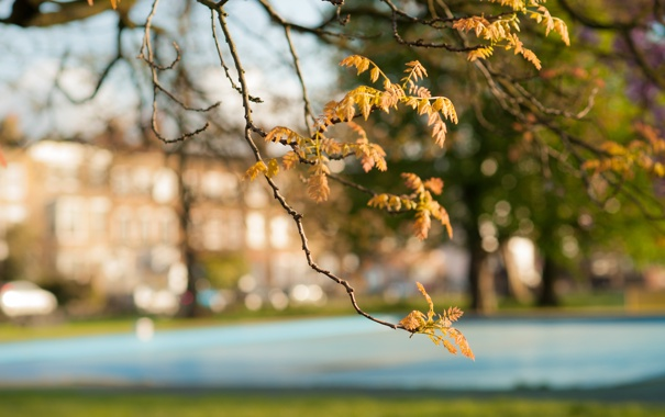 Фото обои осень, листья, Ветка