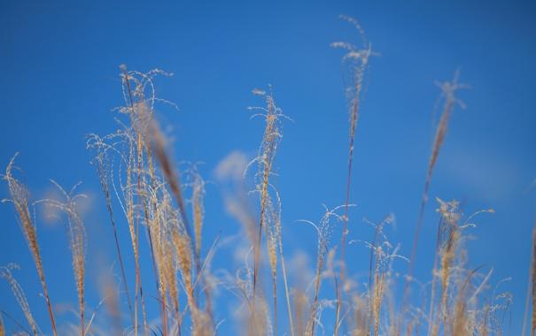 Фото обои осень, небо, трава, макро, растение