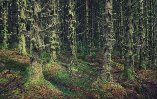 Фото обои forest, trees, woods, wilderness, scotland