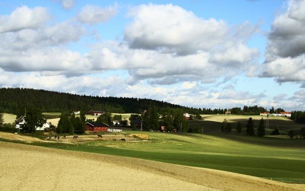 Фото обои пейзаж, трава, луг, поле, кони, лошади, деревья