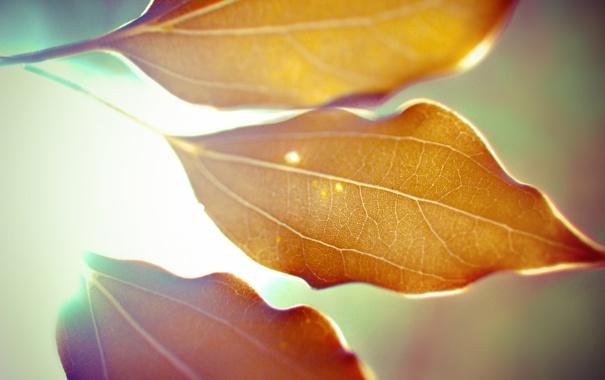 Фото обои осень, листья, макро, свет