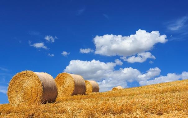 Фото обои лето, небо, пейзаж, сено