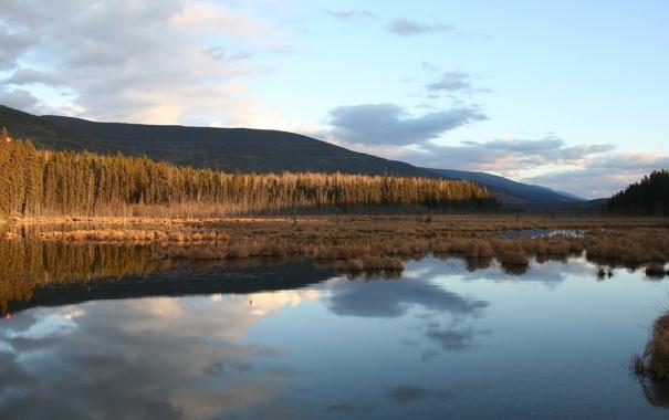 Фото обои пейзаж, природа, болото