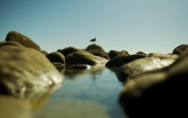 Фото обои камни, фото, птица, вода, море, обои, чайка