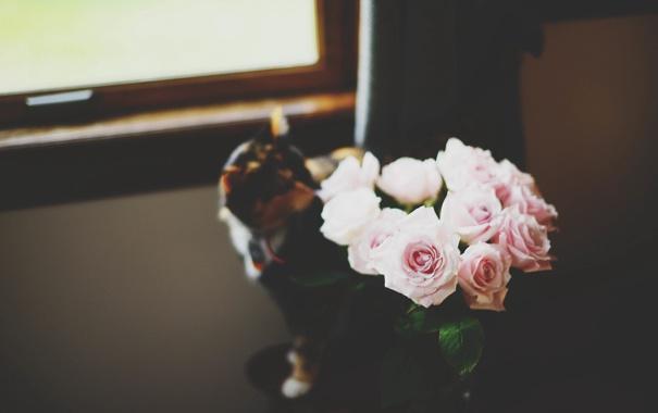 Фото обои кошка, кот, цветы, розы, розовые