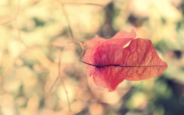 Фото обои красный, лист, листок, ветка
