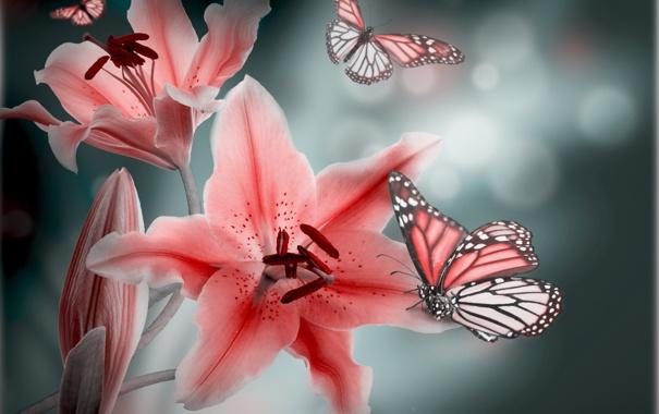 Фото обои листья, бабочка, лепестки, бутоны, цветение, leaves, petals