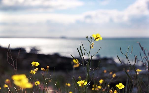 Фото обои макро, цветы, природа, растения, лепестки, стебельки