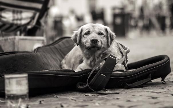 Фото обои взгляд, друг, улица, собака