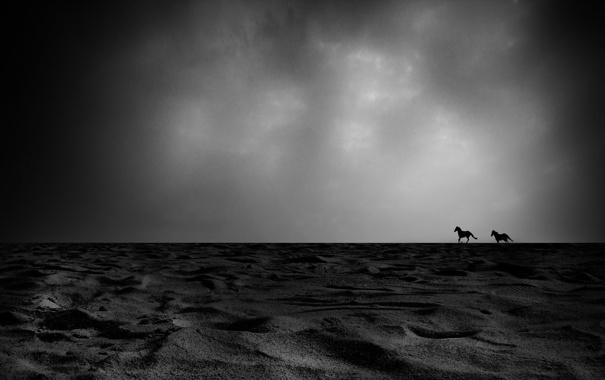 Фото обои cielo, arena, caballos