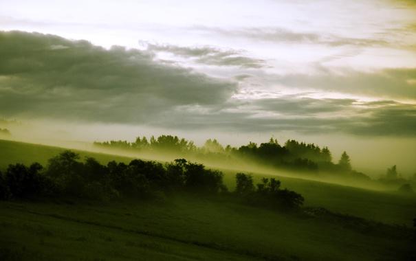 Фото обои лес, туман, склон, луга