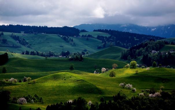 Фото обои лес, деревья, холмы, весна, цветение