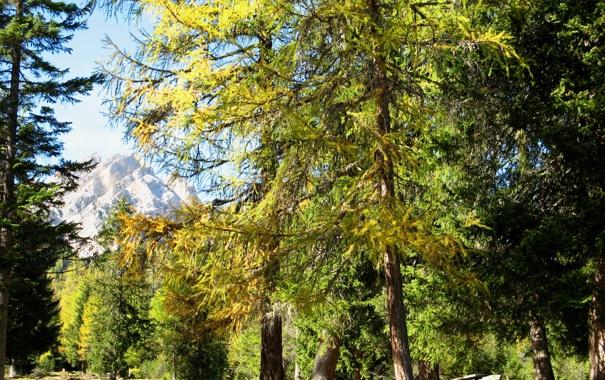 Фото обои деревья, природа, парк, фото, Italy, South Tyrol