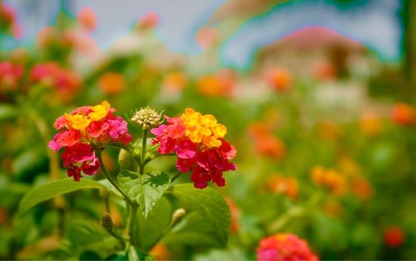 Фото обои яркие, цветение, bloom