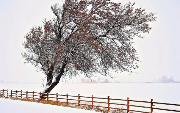 Фото обои зима, дерево, забор
