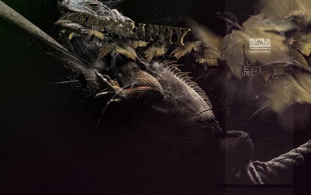 Фото обои дизайн, надписи, игуана, рептилия