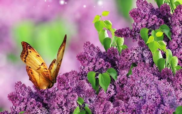 Фото обои листья, крупный план, ветки, блики, бабочка, сирень, боке