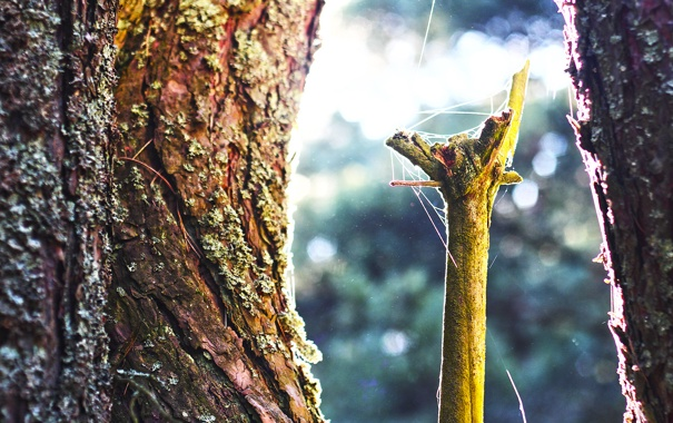Фото обои tree, spider web, bark
