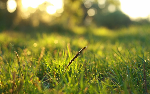 Фото обои зелень, трава, макро
