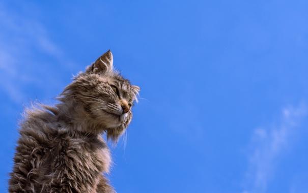 Фото обои кот, фон, кошак, потрепанный