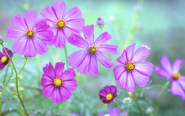 Фото обои капли, роса, природа, луг, поле, лепестки