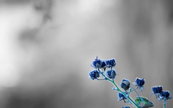 Фото обои макро, цветы, растение, серый фон