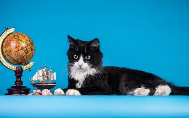 Фото обои кошка, Кот, кораблик, глобус, cat, голубой фон